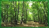 Miškų pirkimas. Miškų pardavimas.