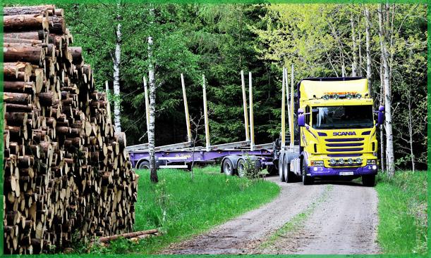 Parduodama apvali mediena
