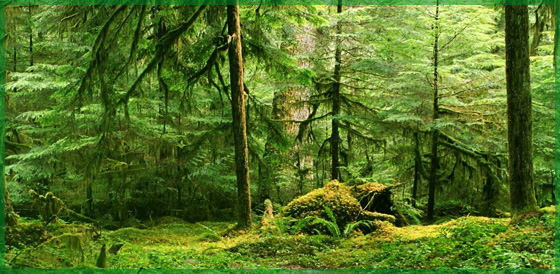 Miškų pirkimas